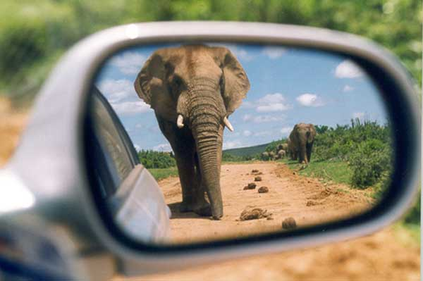 Big 5 Game Viewing at Addo - Crown River Safari